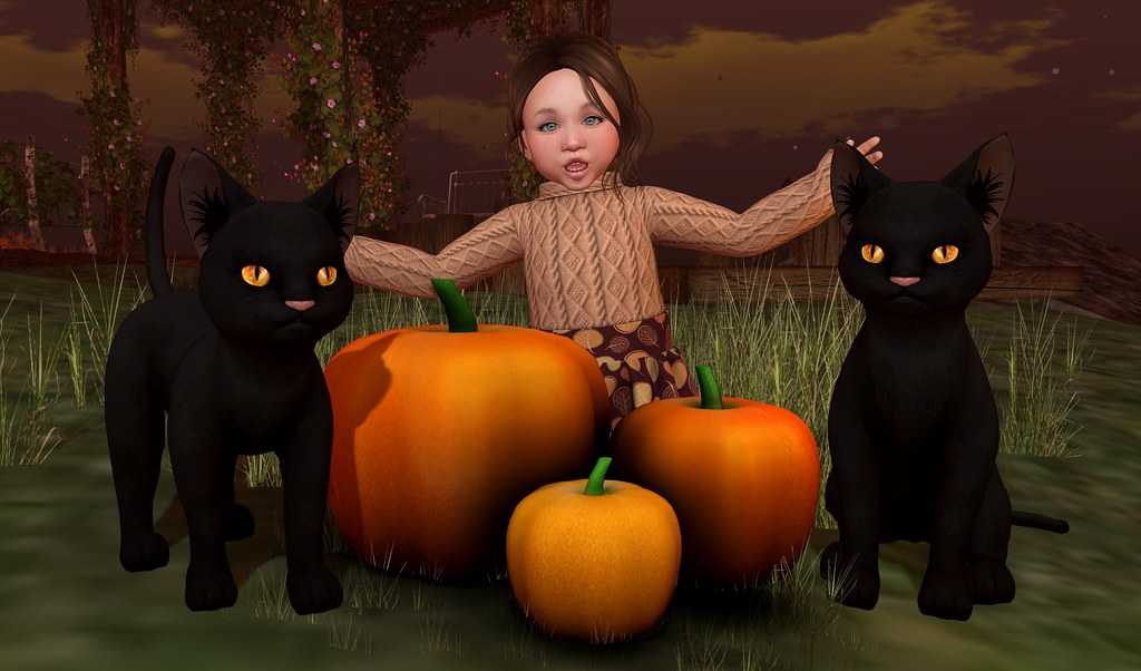 Pumpkins, Kitties and Cuteness 2_001b