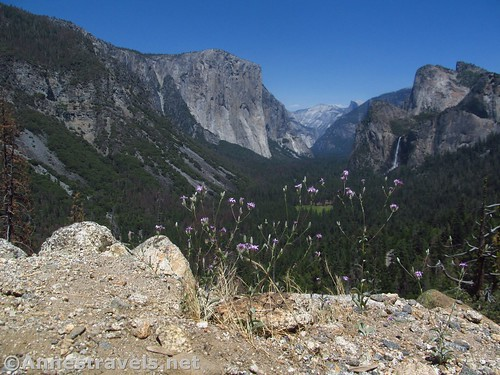 Wildflowers at Artist Point in Yosemite National Park, California