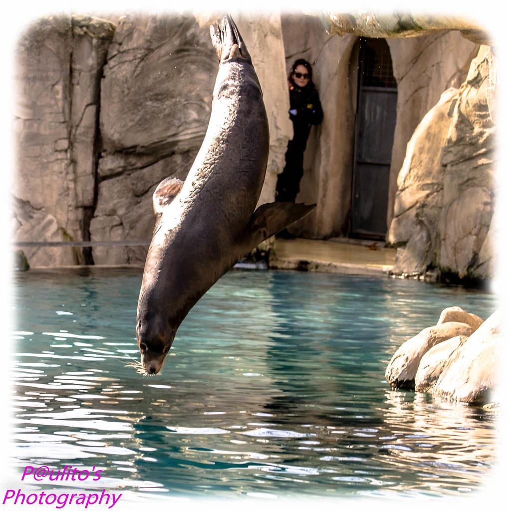 Zoo Beauval Hotel Proche
