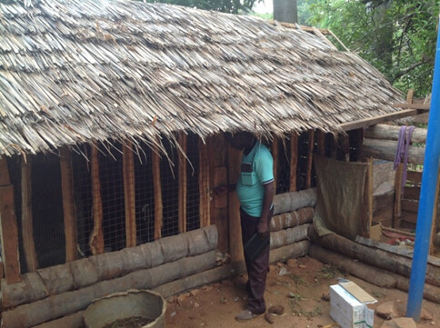New shed after flock reaches 150 chickens (photo credit: ILRI)