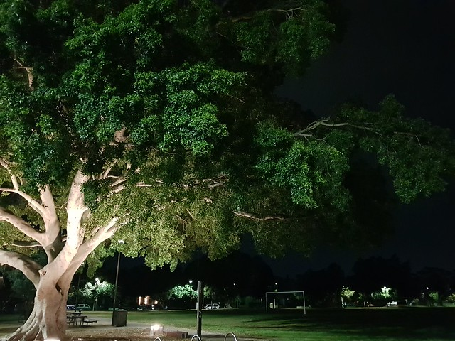 Park Tree at Night - Samsung Galaxy Note 8 photo example