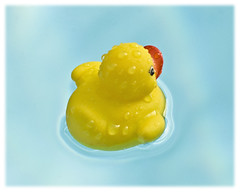 Pool 2017 #10; The Natural History of Rubber Ducks