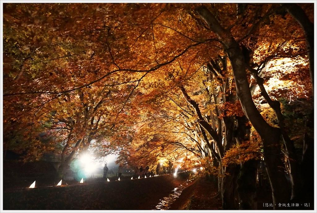 紅葉迴廊-紅葉祭-夜楓-38