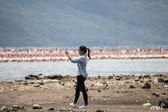 Cara_flamingoes