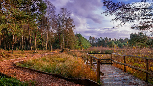 The path to the moor