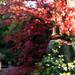 Biddulp_Gardens_ 27 05-11-17.jpg