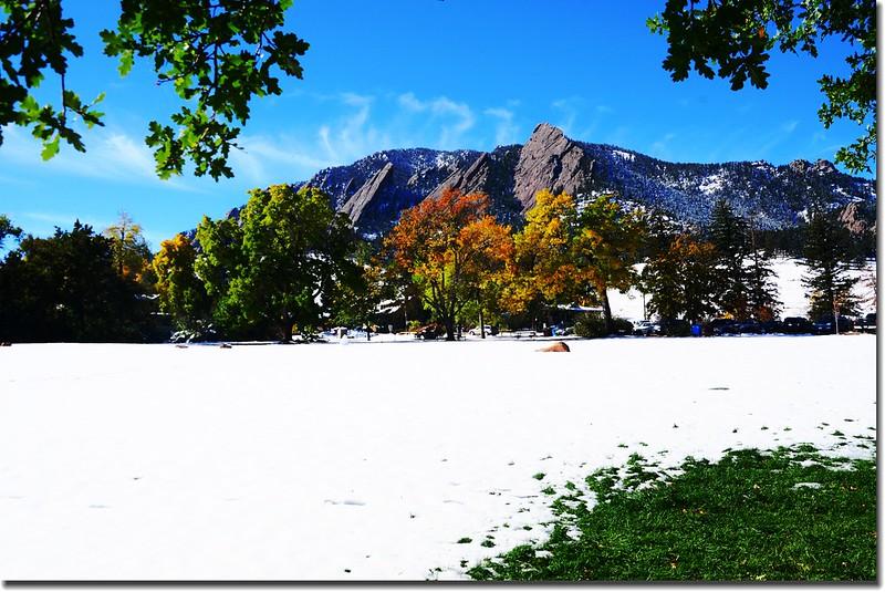 2017 Maple in Fall, Boulder, Colorado  (6)