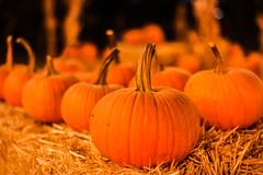 jack-o-little pumpkins