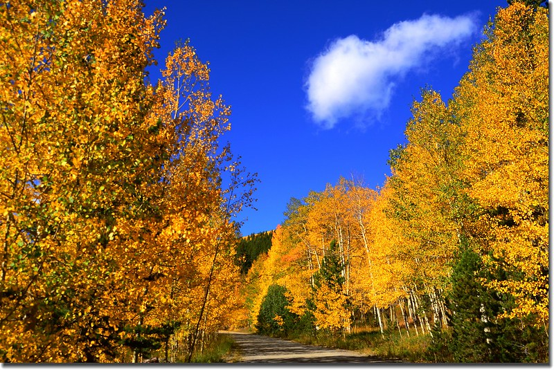 Fall colors, Mount Evans Scenic Byway, Colorado (19)