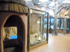 Africa house: Meerkat