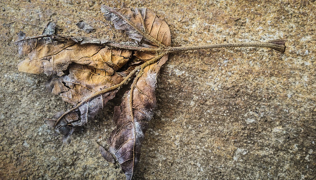 Autumn - From Dust We Came,  To Dust We Return.
