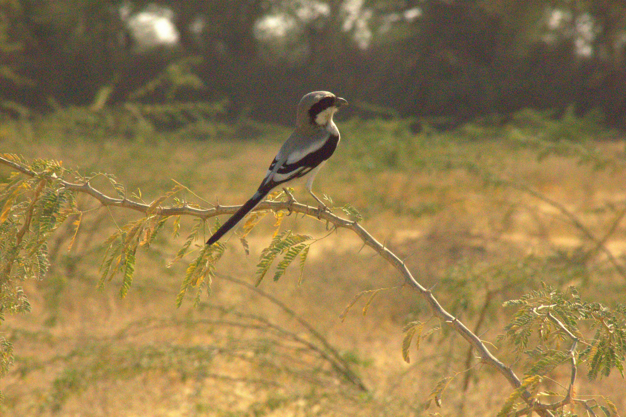 Wildbird spotting can be done at Salawas