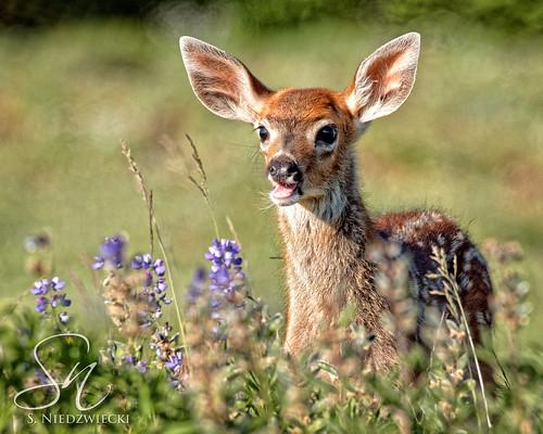 Oh, Deer! 9489-17