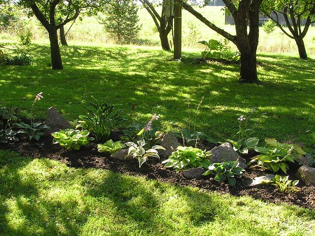 Garden Hosta Bed