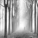 A plantation, some fog and some rays by Ray Jennings AU