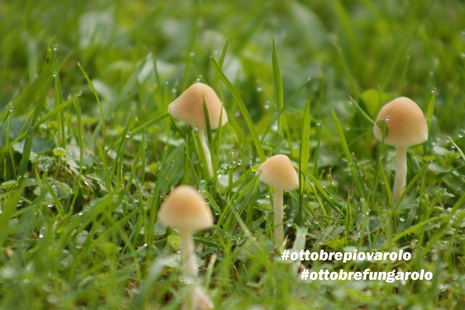 funghi e pioggia2