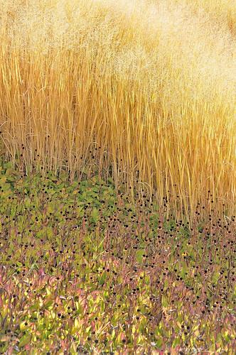 eechillington nikond90 viewnx2 corelpaintshoppro utah redbuttegardens nature grass flower impressionistic