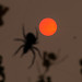 Sun, Sand and Spider