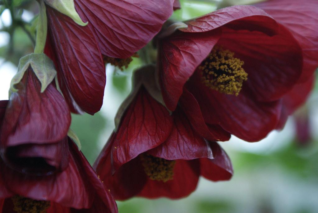 Superbe fleur du jardin botanique de Glasgow