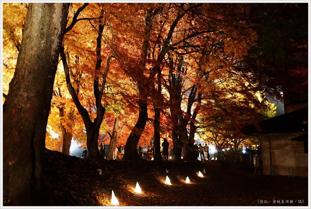 紅葉迴廊-紅葉祭-夜楓-43