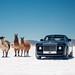 4 Llamas by Alex Penfold
