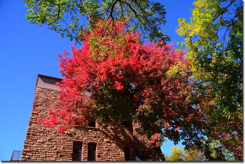 2017 Maple in Fall, Boulder, Colorado  (12)