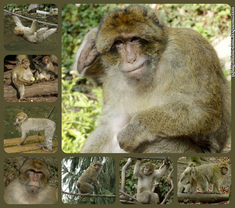 Montagne-des-Singes-monky-collage-a