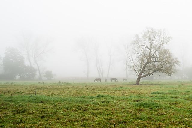 a foggy morning, Nikon D610, AF-S Nikkor 18-35mm f/3.5-4.5G ED
