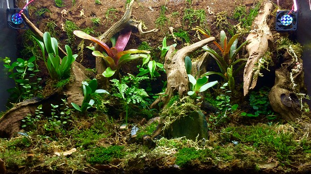Aquatic plant terrarium | UK Aquatic Plant Society