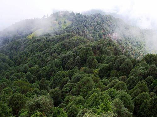 उत्तराखण्ड के जंगल