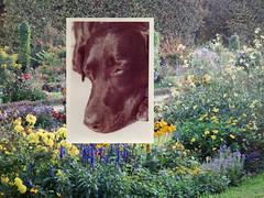 ©RomanOswald - Série 'Carte Postale' - ''Doggy Dog''