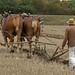 Bucklesham Plough Day