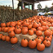 2017 YIP Day 282: Pile of pumpkins