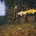 2017:10:28 18:21:52 - Blumenkübel - Herbst