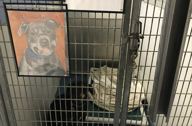 Animal Shelter Adoption Art