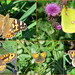Mill Hill  Butterfly Collage