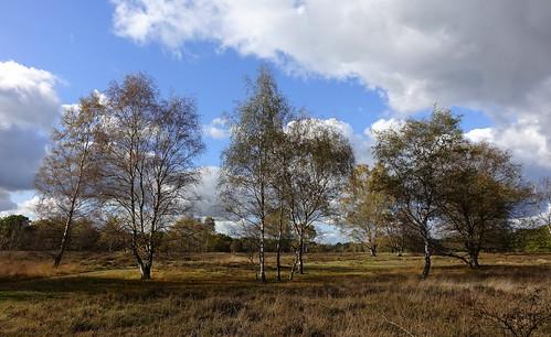 Wandeling over de Strabrechtse Heide/ Walk over The Strabrechtse Heath