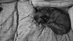 Nap Interrupted