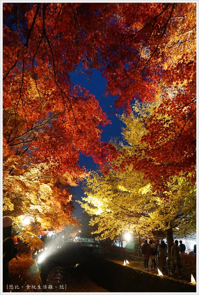 紅葉迴廊-紅葉祭-夜楓-14