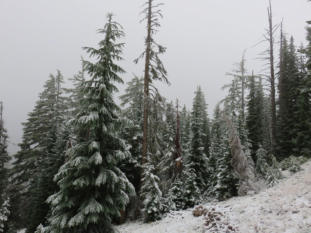 Snowy trees along the Senoj Lake Trail