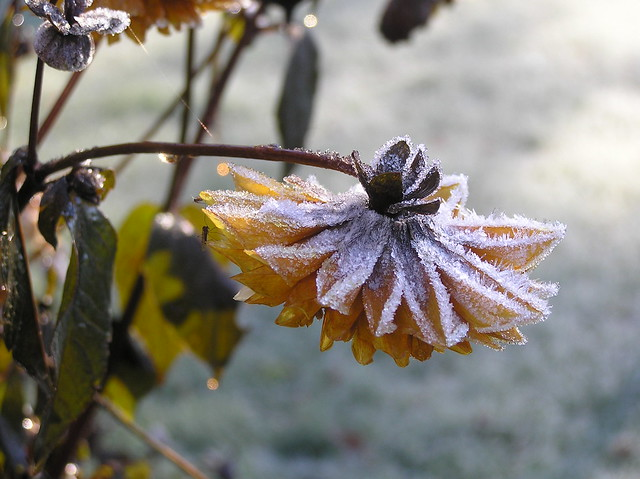 First frost of autumn 2017