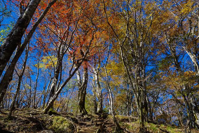ブナの原生林2