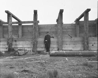 Lake Washington Ship Canal under construction, 1915