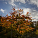 Botanic Gardens Edinburgh Oct 2017 -107