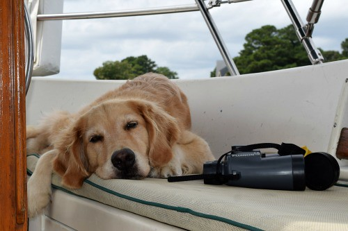 Honey snoozing at anchor in Reedville, Virginia. Pamela Douglas Webster: #StudyAbroadBecause It Makes Your World Big
