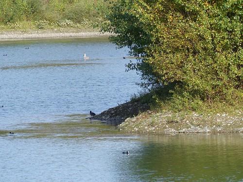 Labatut, Landes: étang CEMEX, réserve gérée par la SEPANSO