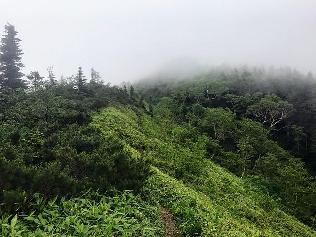 乗鞍岳 平湯・乗鞍新登山道 ハイマツと笹の境界