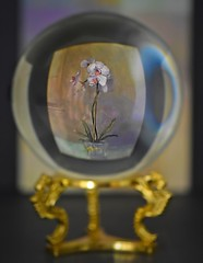 Orchid In An Orb