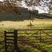 Morning light near Rotherfield Greys
