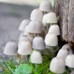Tiny mushrroms